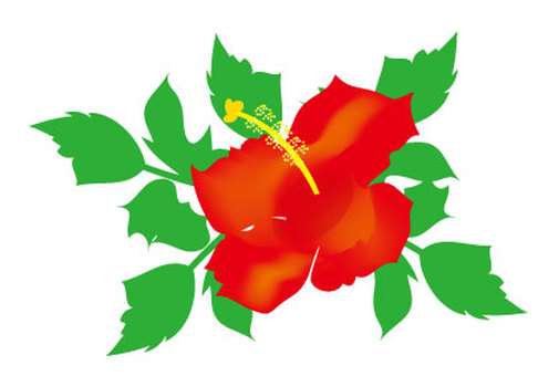 Hibiscus Red summer red summer country Hawaiian flowers