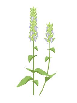 Chia Seed Flower