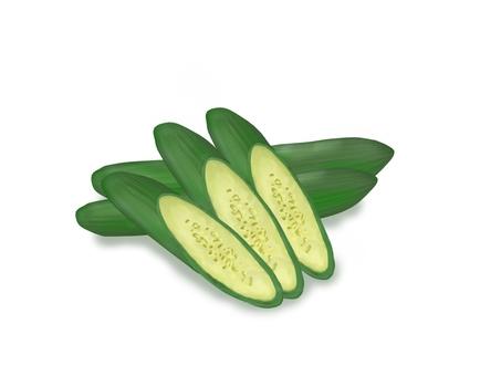Illustration of cucumber 2