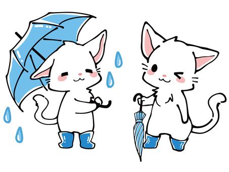 與傘的白色貓在雨季期間