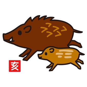 Zodiac 亥 wild boar