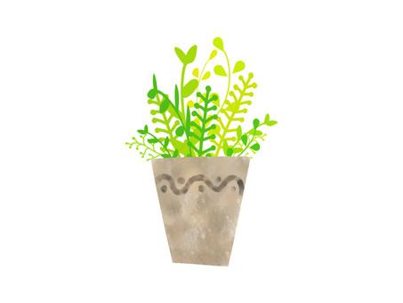 관엽 식물 ver01