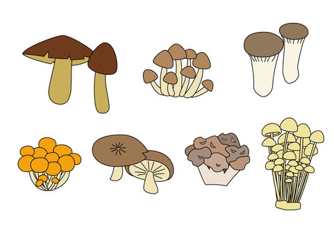 Edible mushroom set