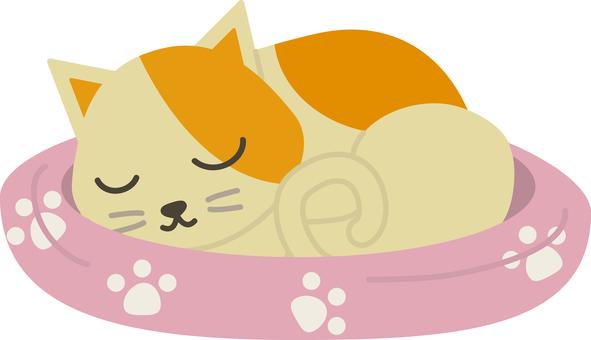 Pet 20 (sleep · cat 01)
