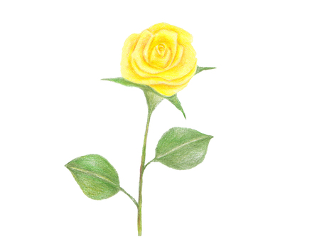 Yellow rose (colored pencil drawing)
