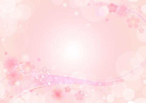 Cherry blossoms 185