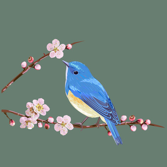Plum blossom and blue bird