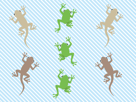 Frog and gecko