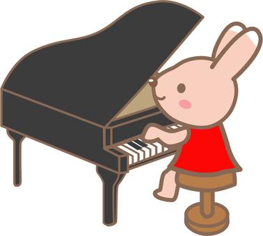 피아노 토끼 씨