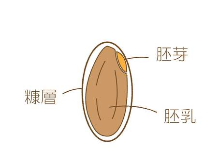 Brown rice description structure