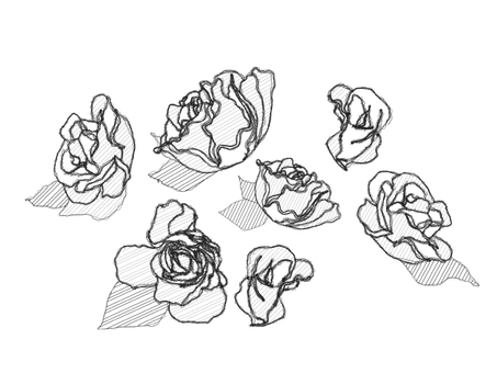 Roses _ hand-drawn wind