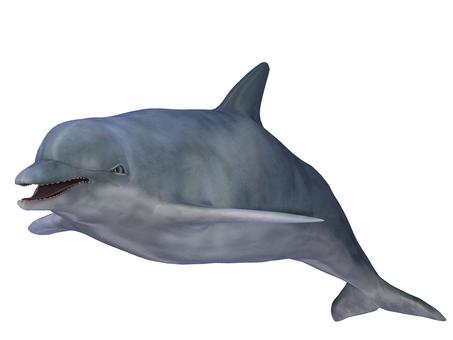 Dolphin 02