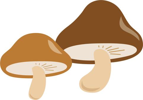 Plant mushrooms 2