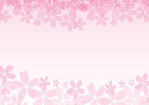 Sakura back