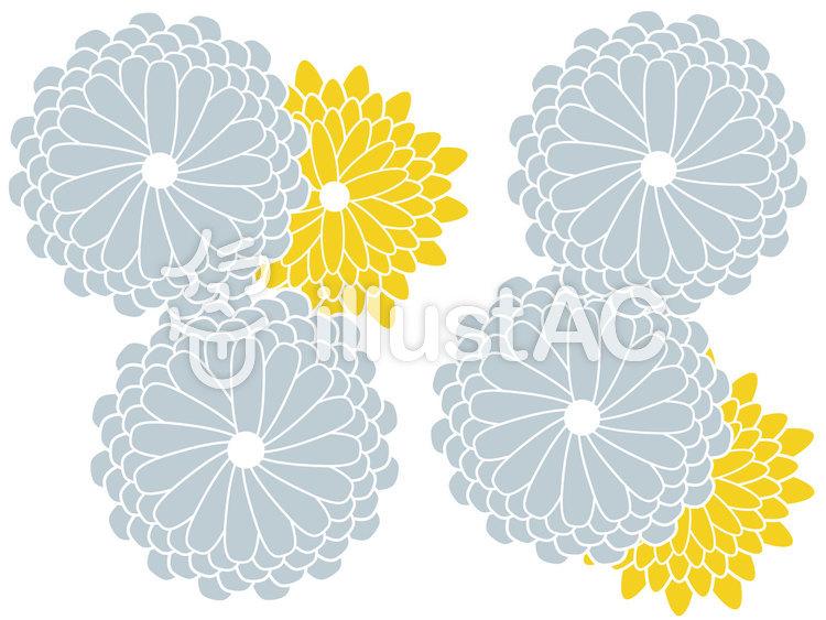 丸菊のイラスト