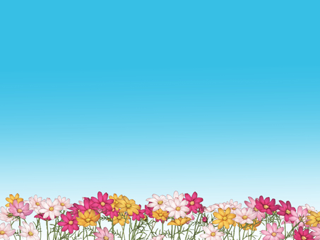 Cosmos and blue sky 2