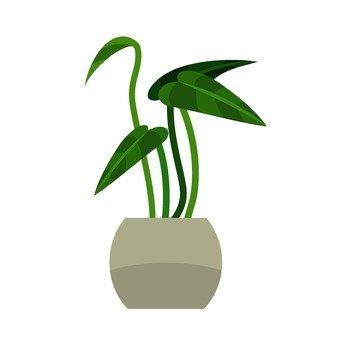관엽 식물 4