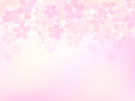 Cherry tree image 001