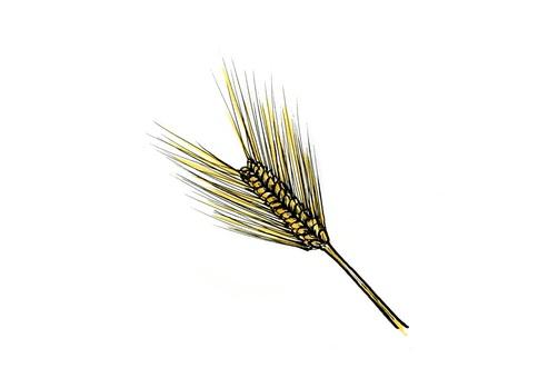 Six barley