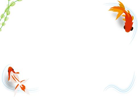 Goldfish image 1