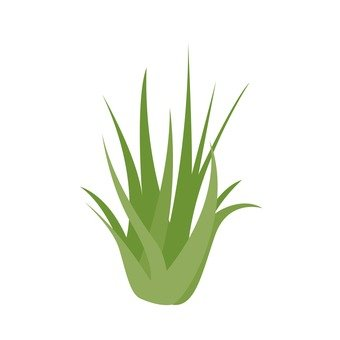 관엽 식물 1