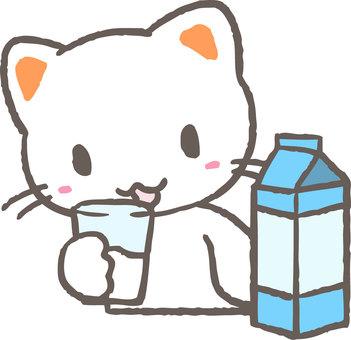 우유를 마시는 고양이