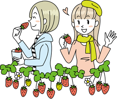 草莓採摘2