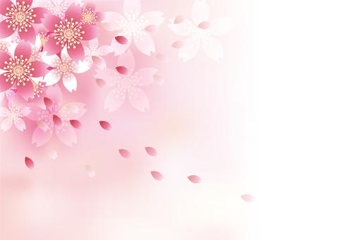 벚꽃의 꽃 61