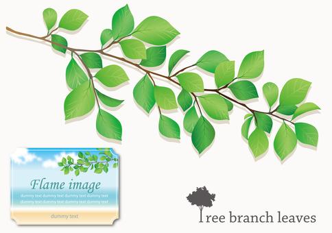 Tree branch leaves