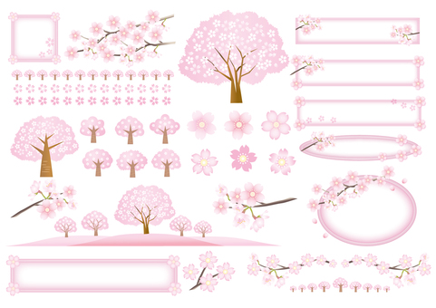 Cherry blossom trees and petals