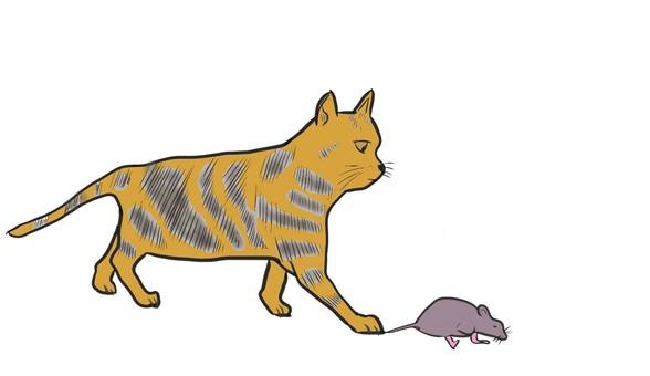 一隻貓抓到一隻老鼠