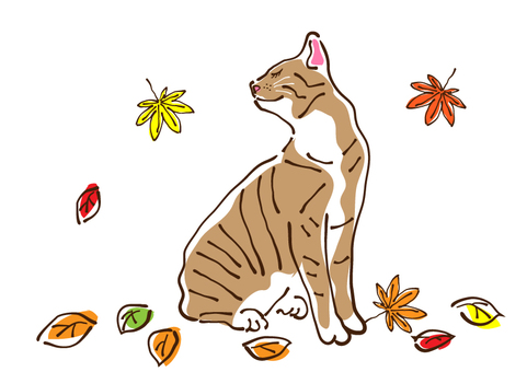 A cat feels a visit of autumn