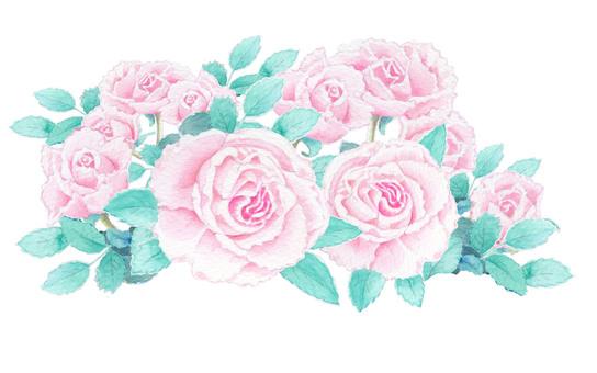 Pink roses 002 ★ 0031-R
