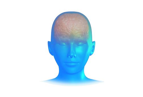 뇌의 CG 이미지 _001