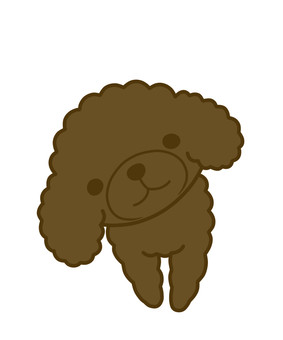 Toy poodle brown