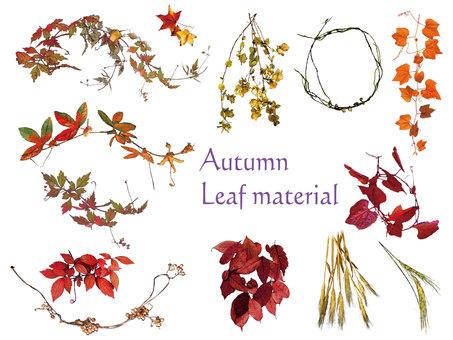 Autumn leaves set 1 in autumn