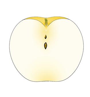 梨の断面図