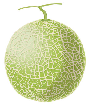 Melon 1 / Fruit