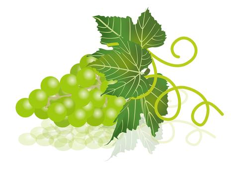 Delicious grape 11