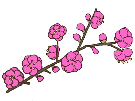 Plum flower branch