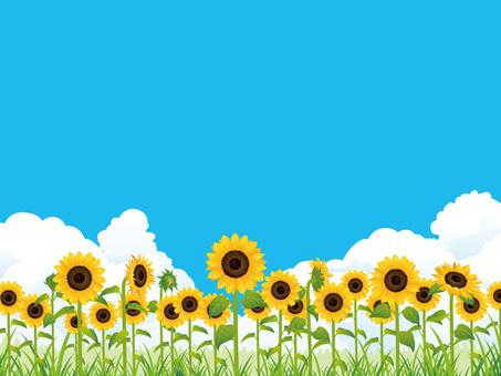 Summer refreshing sunflower field (sunflower) background 03