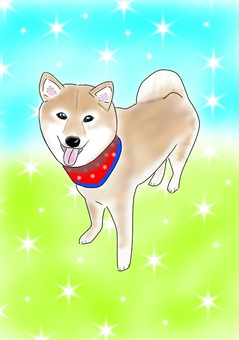 Good mood Shiba Inu