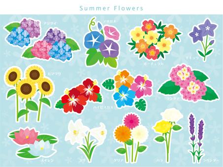 夏天的花朵設置