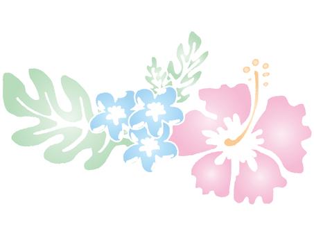 Hibiscus-012