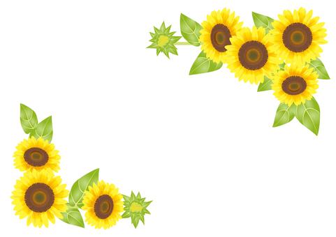 Key frame _ Sunflower