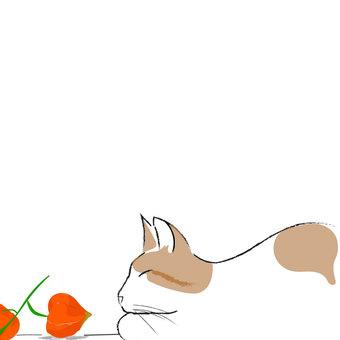 一隻狗和一隻貓