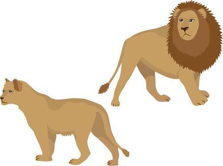 사자 한쌍