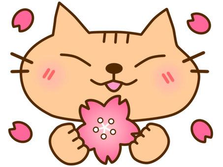 벚꽃과 차 호랑이 고양이