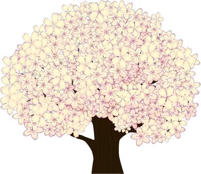 Simple cherry blossoms 4 Shiloh