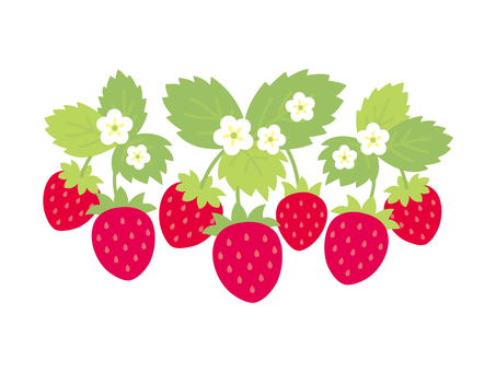 Strawberry material 2